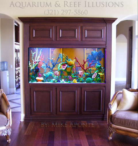 living color aquariums gallery of jellyfish art living color aquariums with living color. Black Bedroom Furniture Sets. Home Design Ideas