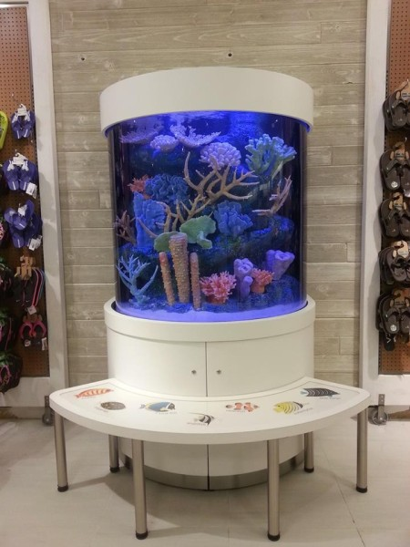 Beautifull 200 Gallon Half Cylinder Aquarium