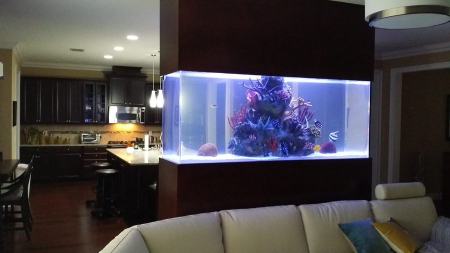 Kitchen Island Fish Tank aquarium reef illusions - aquarium gallery